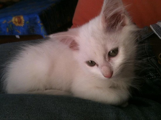 Chaton A Donner Montpellier Nos Amis Les Animaux