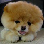 Prix chien