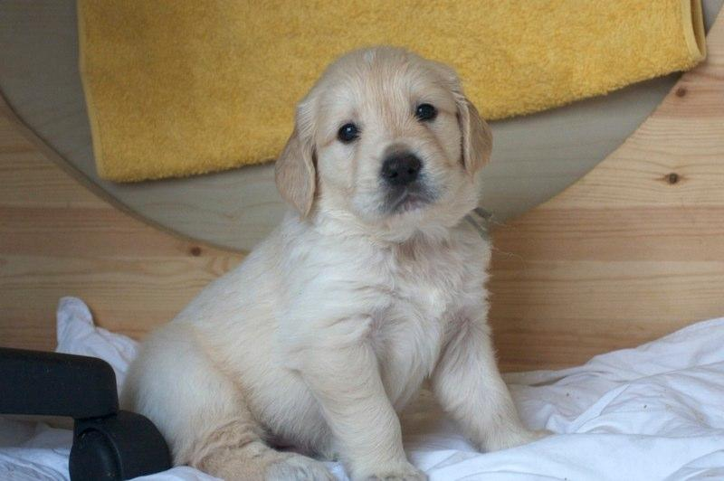 Petit Chiot A Adopter Nos Amis Les Animaux