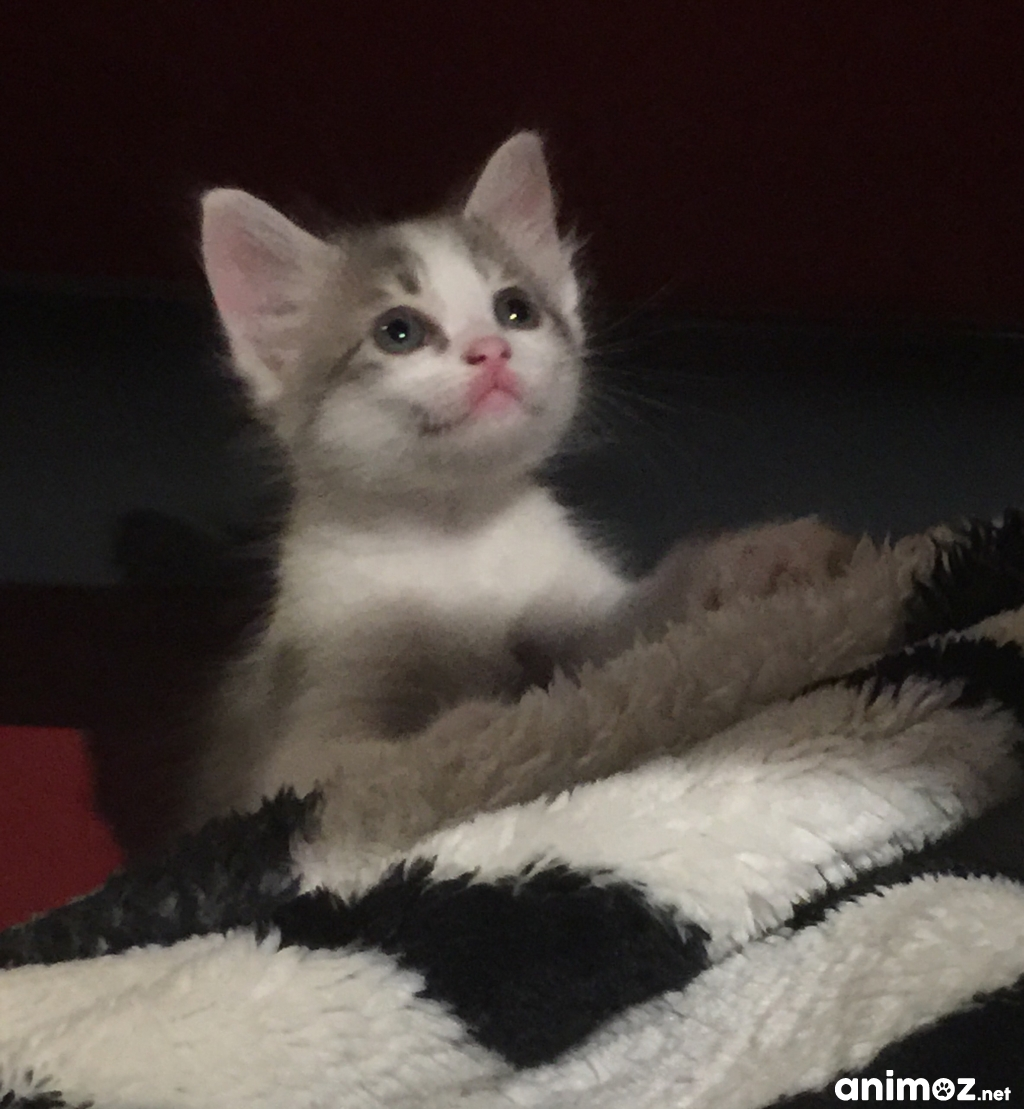 Chaton A Donner Herault Nos Amis Les Animaux