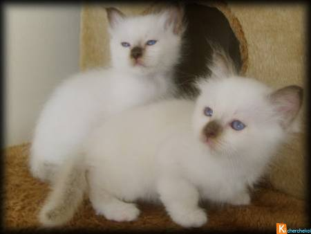 Chaton A Donner Lille Nos Amis Les Animaux