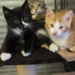 Chaton A Donner 77 Nos Amis Les Animaux