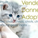 Chaton a donner grenoble