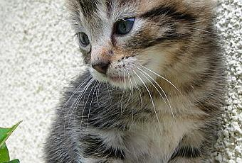 Chaton A Donner 06 Nos Amis Les Animaux
