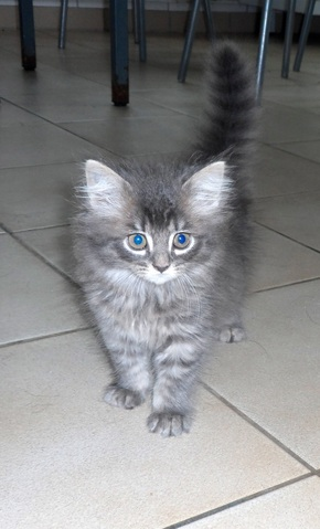 Chaton A Donner 74 Nos Amis Les Animaux