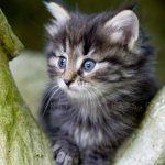 Petit chaton a donner