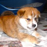 Chiot a donner toulouse