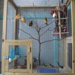 Cage a oiseaux a donner