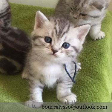 Chaton A Donner 95 Nos Amis Les Animaux