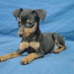 Cherche chien à adopter