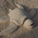 Tortue a donner