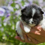 Vente de chien