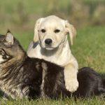 Chenil pour chien heric