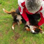 Chenil pour chien finistere