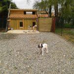 Chenil chien jardin