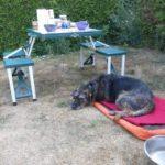 Chenil chien saumur