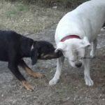 Chenil chien reunion