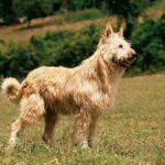Chenil chien picardie