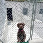 Chenil garde de chien quimper