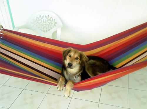 chenil chien doubs nos amis les animaux. Black Bedroom Furniture Sets. Home Design Ideas