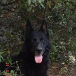 Chenil chien rhone