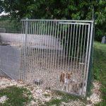 Chenil chien 93