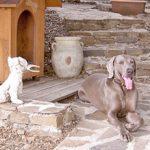 Chenil chien herault