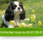 Chenil pour chien indre et loire