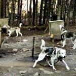 Chenil chien de traineau