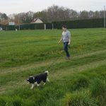 Chenil chien yvelines