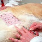 Allergie alimentaire chez les chiens - Comment la détecter et l'éliminer