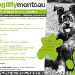 Formation gratuite: Bien-être canin chez les protecteurs
