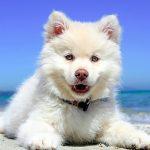 Comment prendre soin d'un chien en été?