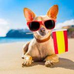 Loi sur les animaux en Espagne, une éducation réglementée?