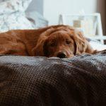 Si vous pouviez changer certains comportements de votre chien?