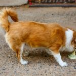 Problèmes de foie chez le chien