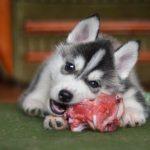 Valeur biologique des protéines contenues dans les aliments pour chiens