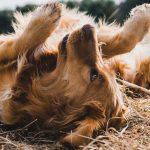 Résidence pour chien: combien ça coûte?