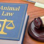 Téléphones et autres informations de contact pour assurer la justice animale