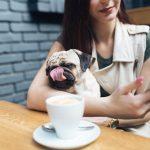 Réglementation pour les chiens dans les établissements publics