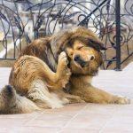 Les allergènes les plus courants chez les chiens, que faire?