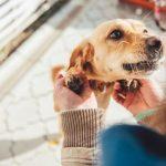 Comment les chiens peuvent-ils reconnaître les membres de leur famille?
