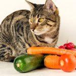 Les chats peuvent-ils manger des légumes?