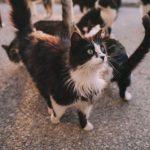 Quelles maladies les chats peuvent-ils nous transmettre?