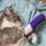Lame Chats: causes communes et traitement