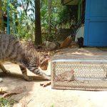 La leptospirose chez le chat: symptômes et traitement