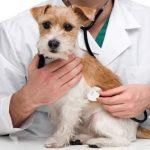Maladies courantes chez les chiots et les chiens adultes