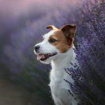 3 herbes médicinales qui aident à améliorer la santé des animaux domestiques