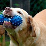 Principales maladies dentaires chez le chien