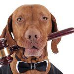 Protection juridique des animaux domestiques à Madrid